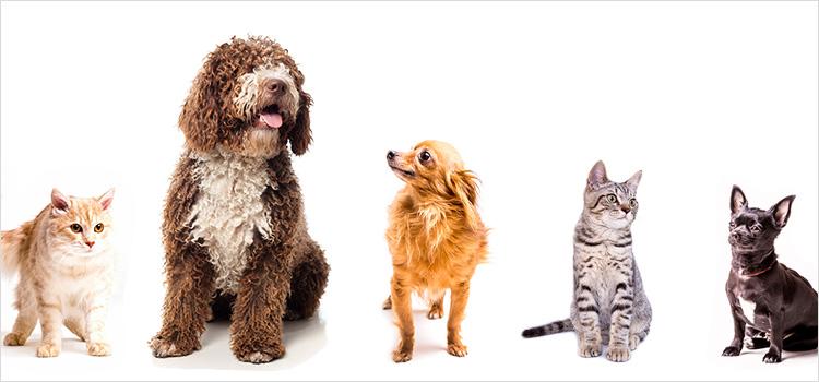 חיות מחמד – כל מה שצריך ברשת